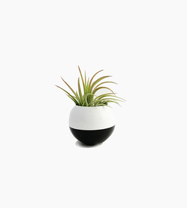 Sea   asters sphere pod planter   white   black